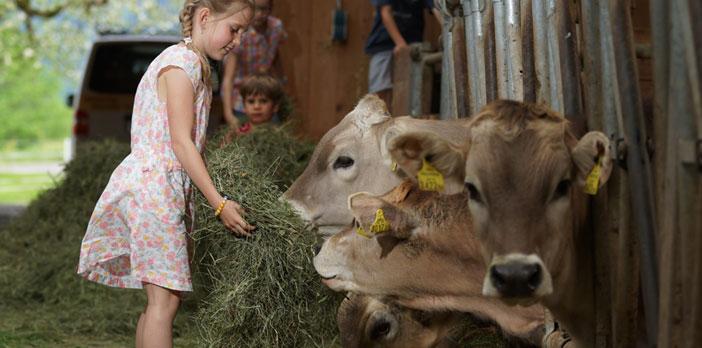 Urlaub am Bauernhof - Ja klar, Kühe fressen Gras!
