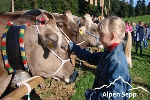 Gesunde Kühe für beste Milch