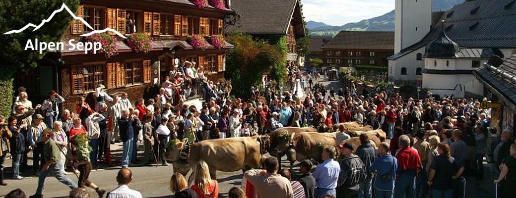 Alpabtrieb Bregenzerwald 2015