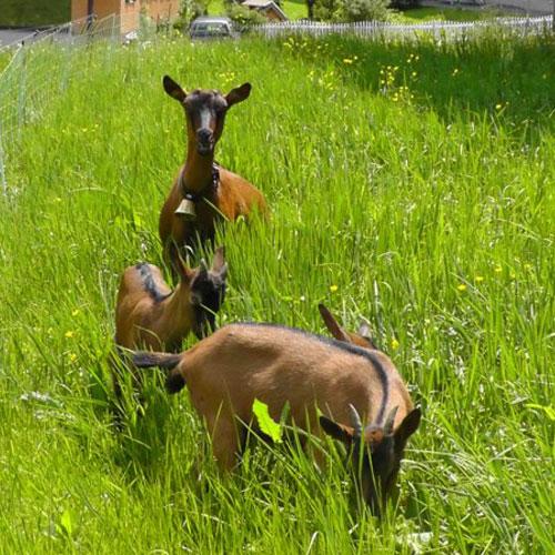 Urlaub am Bauernhof Bischof in Mellau im Bregenzerwald