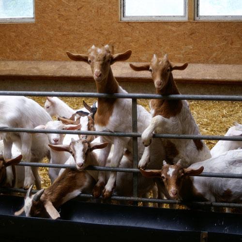 Urlaub am Bauernhof Held in Schwarzenberg im Bregenzerwald