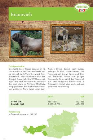 Braunvieh in Vorarlberg und Tirol