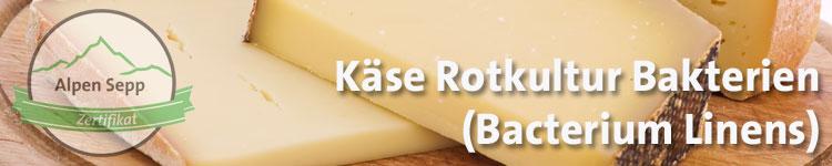 Käse Rotkultur Bakterien (Bacterium Linens) im Käse Wiki vom Alpen Sepp